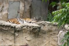 Zoo Leipzig 230711- IMG_3427
