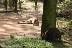 Zoo Leipzig 230711- IMG_3436