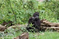 Zoo Leipzig 230711- IMG_3443-2