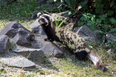Zoo-Magdeburg-070410-IMG_9638