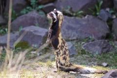 Zoo-Magdeburg-070410-IMG_9640