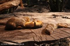 Zoo-Magdeburg-070410-IMG_9661