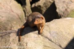 Zoo-Magdeburg-070410-IMG_9675
