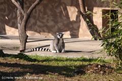 Zoo-Magdeburg-070410-IMG_9708