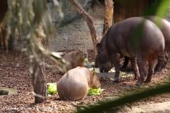 Zoo-Magdeburg-070410-IMG_9729