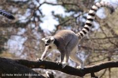 Zoo-Magdeburg-070410-IMG_9735