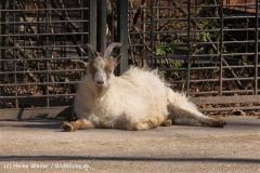 Zoo-Magdeburg-070410-IMG_9746