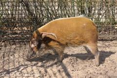 Zoo-Magdeburg-070410-IMG_9751