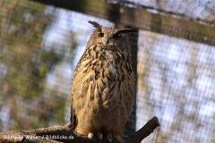 Zoo-Magdeburg-070410-IMG_9772