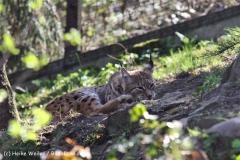 Zoo-Magdeburg-070410-IMG_9792