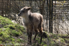 Zoo-Magdeburg-070410-IMG_9808
