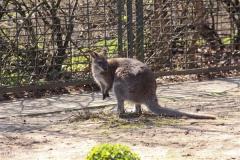 Zoo-Magdeburg-070410-IMG_9811