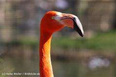 Zoo-Magdeburg-070410-IMG_9820