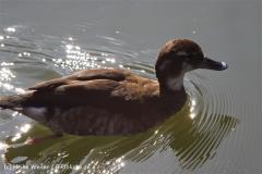 Zoo-Magdeburg-070410-IMG_9837