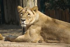 Zoo-Magdeburg-070410-IMG_9838