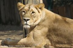 Zoo-Magdeburg-070410-IMG_9839