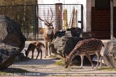 Zoo-Magdeburg-070410-IMG_9854