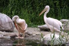 Zoo-Magdeburg-200610-IMG_4245