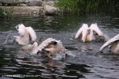 Zoo-Magdeburg-200610-IMG_4277