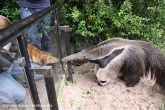 Zoo-Magdeburg-200610-IMG_4344