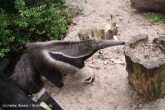 Zoo-Magdeburg-200610-IMG_4357