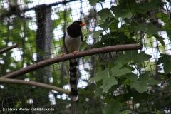 Zoo-Magdeburg-200610-IMG_4441