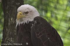 Zoo-Magdeburg-200610-IMG_4483