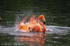 Zoo-Magdeburg-200610-IMG_4519