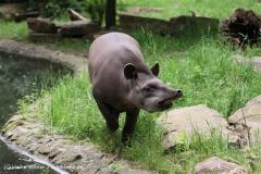 Zoo-Magdeburg-200610-IMG_4641