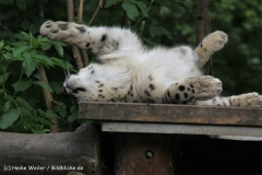 Zoo-Magdeburg-200610-IMG_4747