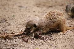 Zoo_Magdeburg_220517_IMG_6159