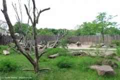 Zoo_Magdeburg_220517_IMG_6170_0245