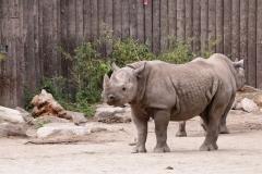 Zoo_Magdeburg_220517_IMG_6171