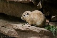 Zoo_Magdeburg_220517_IMG_6178