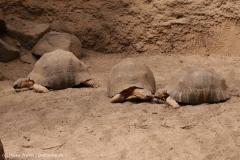 Zoo_Magdeburg_220517_IMG_6185