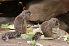 Zoo_Magdeburg_220517_IMG_6190