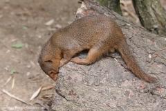 Zoo_Magdeburg_220517_IMG_6198