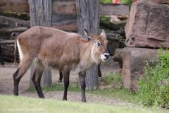 Zoo_Magdeburg_220517_IMG_6202