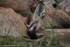 Zoo_Magdeburg_220517_IMG_6217