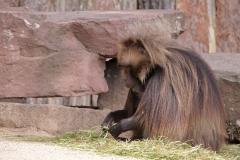 Zoo_Magdeburg_220517_IMG_6253