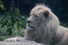 Zoo_Magdeburg_220517_IMG_6326