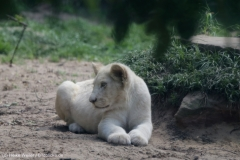 Zoo_Magdeburg_220517_IMG_6330