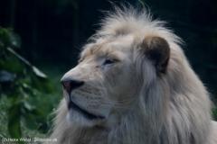 Zoo_Magdeburg_220517_IMG_6335