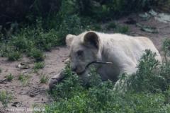 Zoo_Magdeburg_220517_IMG_6339