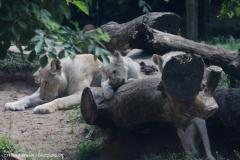 Zoo_Magdeburg_220517_IMG_6390