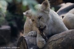 Zoo_Magdeburg_220517_IMG_6402