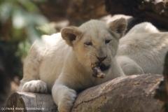 Zoo_Magdeburg_220517_IMG_6406
