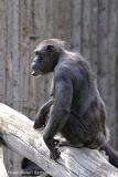 Zoo_Magdeburg_220517_IMG_6426