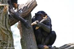 Zoo_Magdeburg_220517_IMG_6443