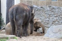 Zoo_Magdeburg_260915_IMG_9703